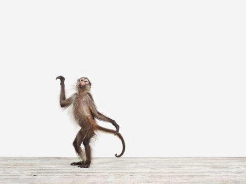 Baby Monkey No. 5, by  Sharon Montrose - 20x200.com