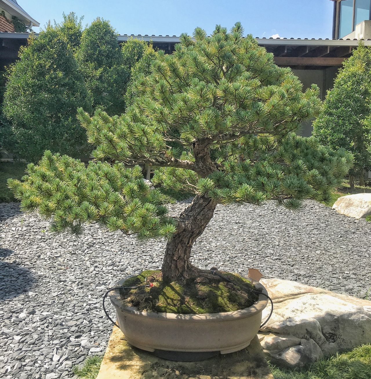 The Bonsai Collection At Monastery Of Holy Spirit Conyers Wiring Yew