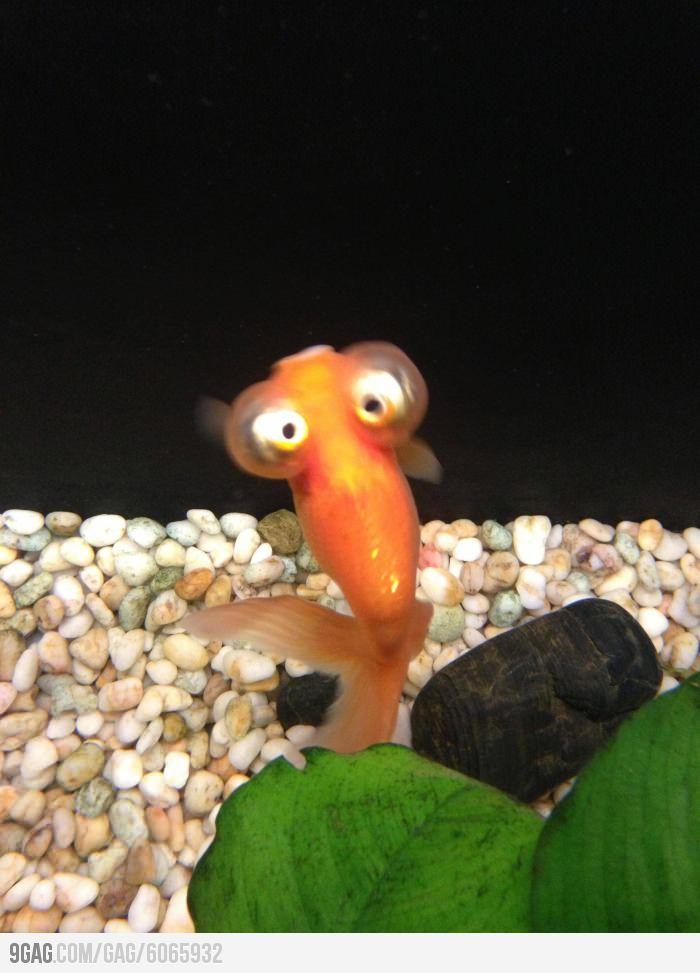 Weird Fish Cute 4