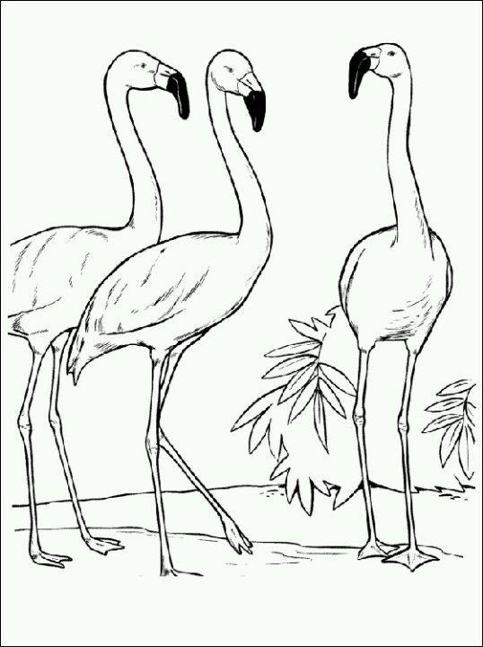 Flamencos Paginas Para Colorear De Animales Flamenco Animal Dibujo Pajaros Para Colorear