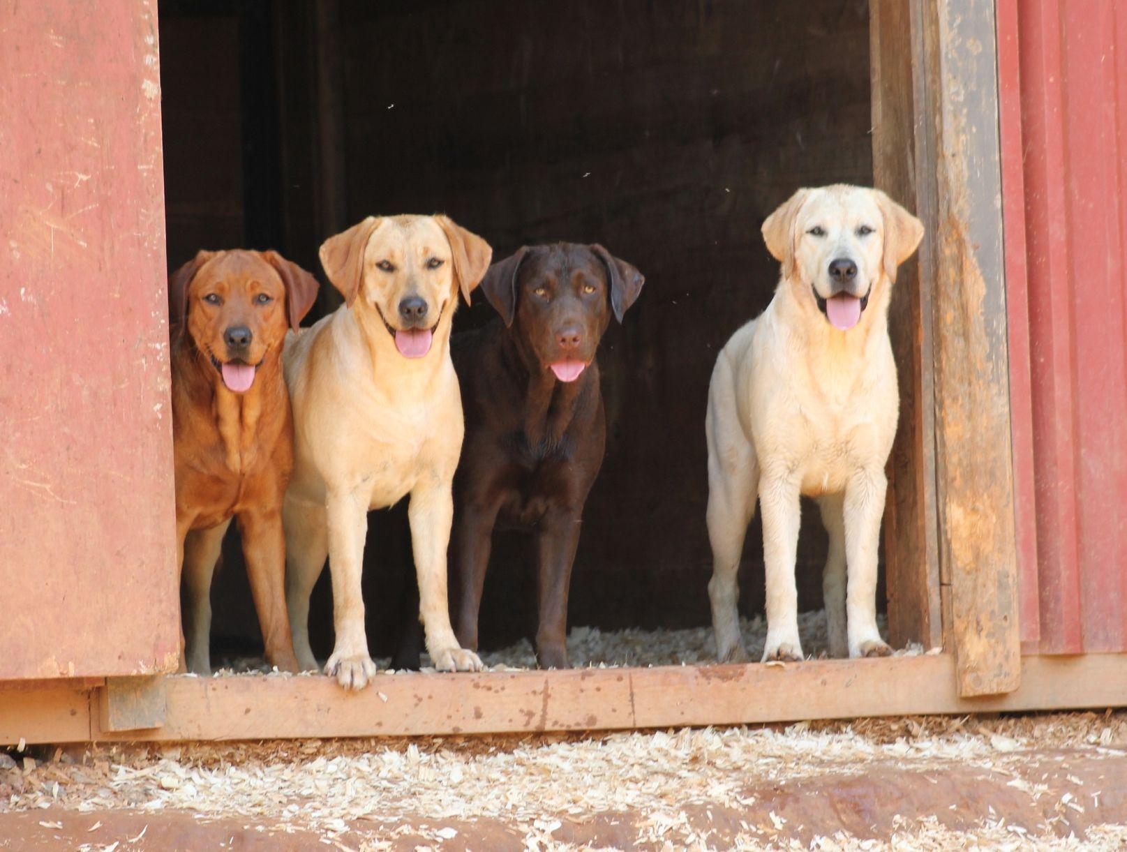 Labrador-dm доска бесплатных объявлений недвижимость севастополя доска объявлений
