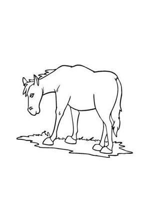 Ausmalbild Pony Auf Der Wiese Zum Ausmalen Ausmalbilder Ausmalbilderpferde Malvorlagen Aus Ausmalbilder Pferde Ausmalbilder Pony Ausmalbilder Tiere