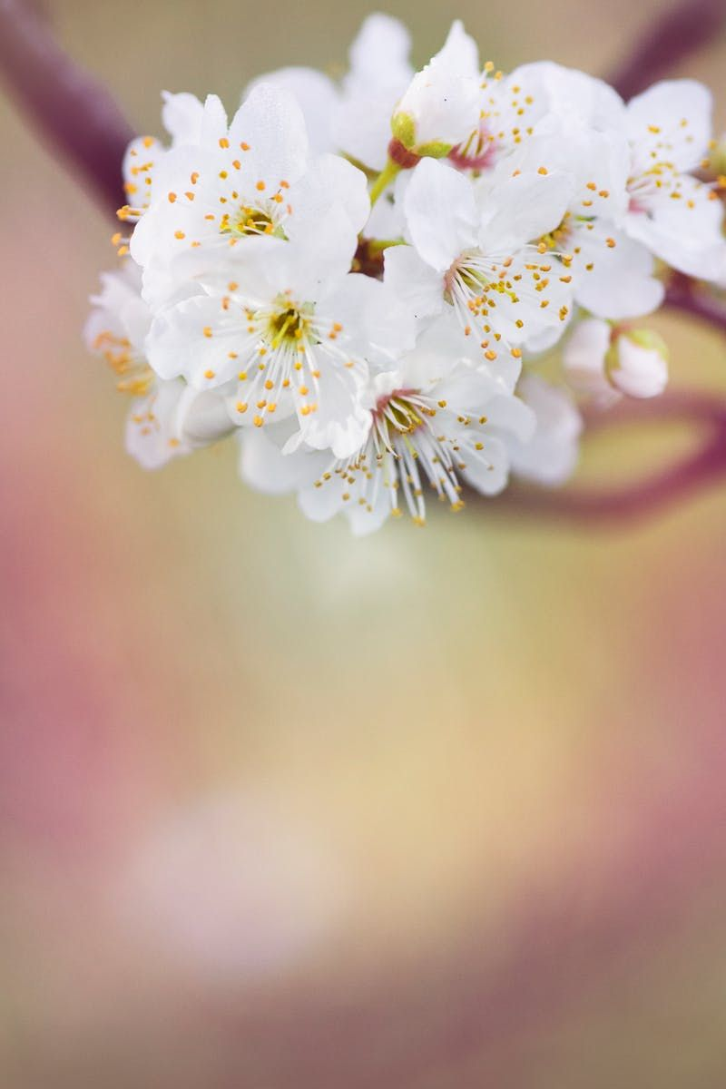 Submission by Kat Jayne. Check out Kat's profile: https://www.pexels.com/u/katlovessteve/ #nature #flowers #petals