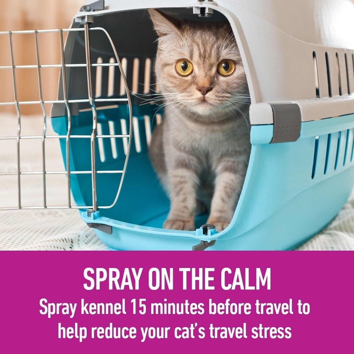 Calming Cat Spray CatSprayingOdorRemoval Cat Spraying