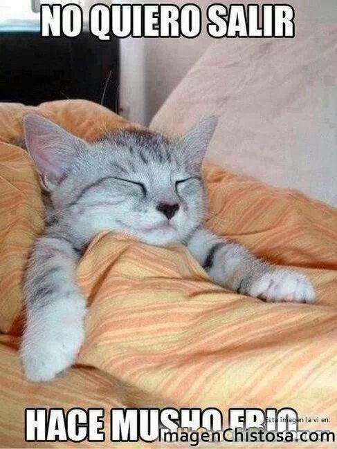 Hace Frio Cats Funny Cats Funny Cat Pictures