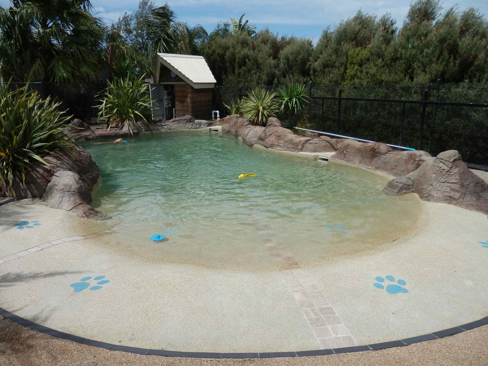 dog swimming pools here 39 s a dog 39 s eye view of the water inviting dogs pinterest hunde. Black Bedroom Furniture Sets. Home Design Ideas