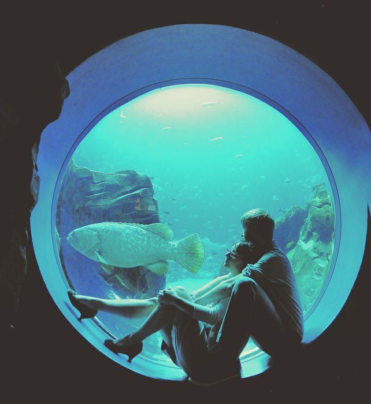 monterey bay aquarium career