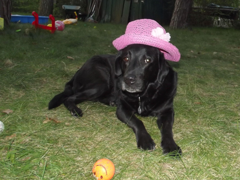 Hunde Foto: Anja und Angel - Das sanfteste Geschöpf der Welt Hier Dein Bild hochladen: http://ichliebehunde.com/hund-des-tages  #hund #hunde #hundebild #hundebilder #dog #dogs #dogfun  #dogpic #dogpictures