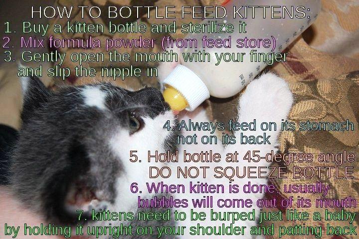 Pin By Carlie Collins On My Diy S Getting A Kitten Bottle Feeding Feeding Kittens