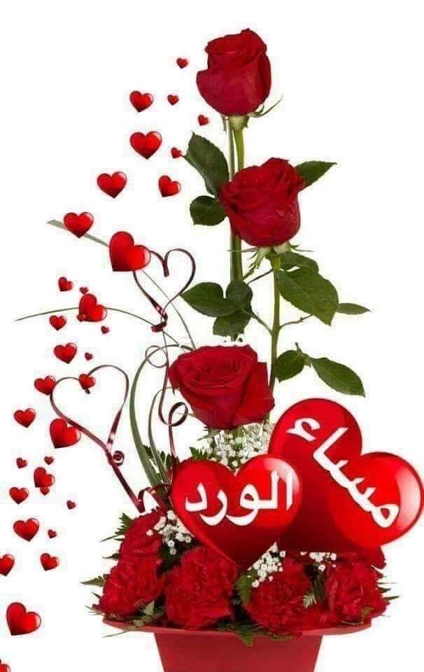 أنتم مساء الخير والنور والشوق وأنتم مساء الذوق وأنتم مسائى يسعد مساء اللي يناظرني بذوق ويسعد م Rose Flower Wallpaper Beautiful Love Flowers Valentines Flowers