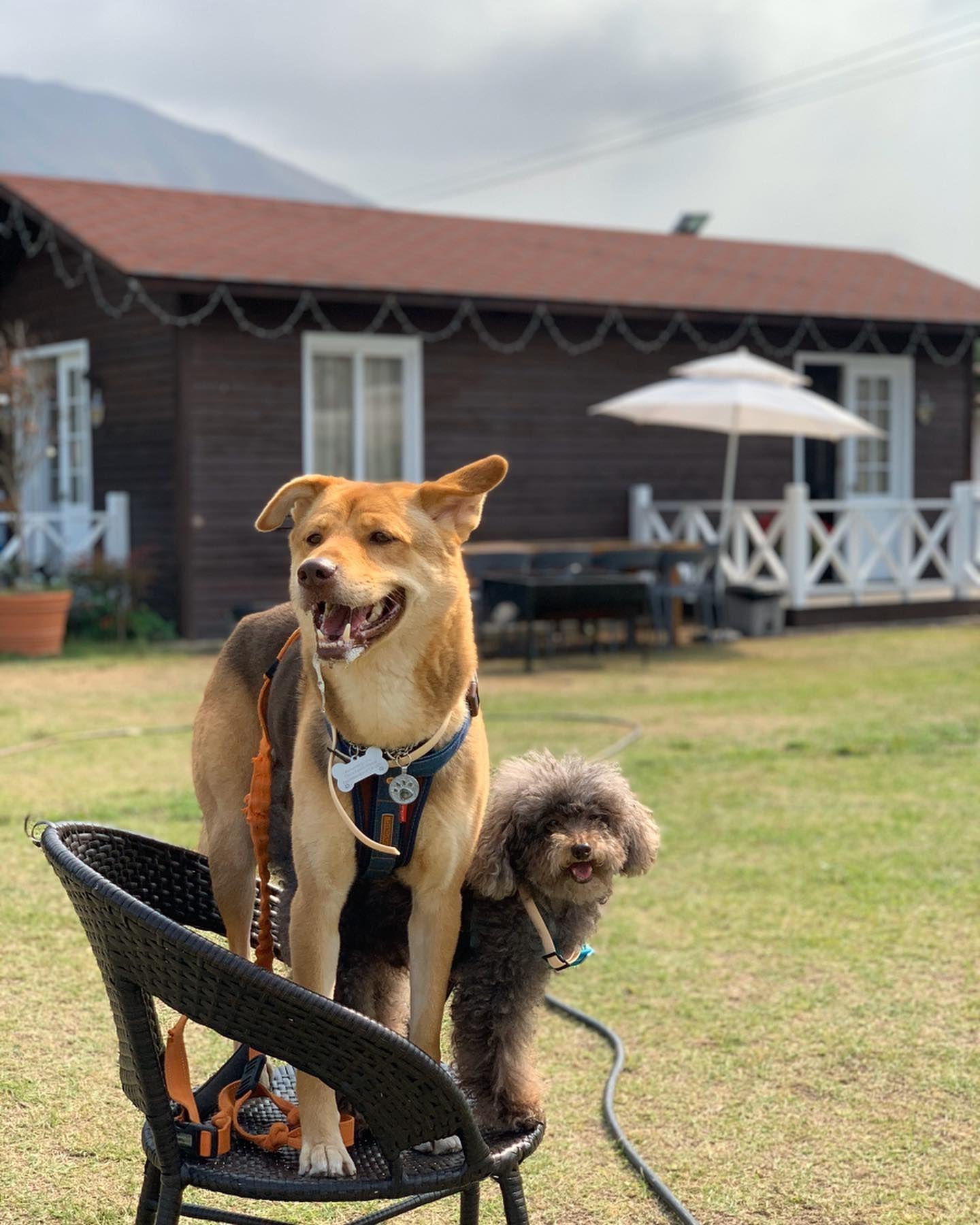 Me and my pal going on an adventure .  #領養不購買 #領養不棄養 #dogtography #dogue #caravan #dogstagram #hkig #igers #hk #hkgirl #hkdog  #rescuedogsofinstagram #poodlesofinstagram#mongrelsofinstagram #mongrel #dog  #brothers #100happydays #happy #life #fashion #family #adoptdontshop #miloandsodahkadventures  #miloandsodastaycation #weekend #唐狗 #唐狗也是寶 ( #📷 @themiloandsodadiaryhk )