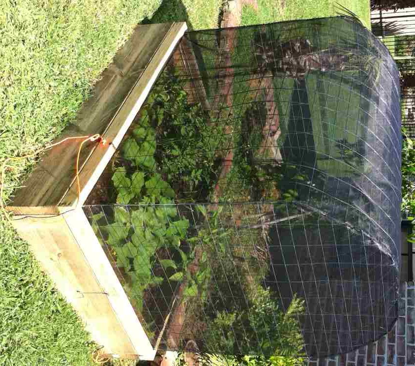 35 Advantageous Small Vegetable Garden Ideas For Your: Organic Covered Vegetable