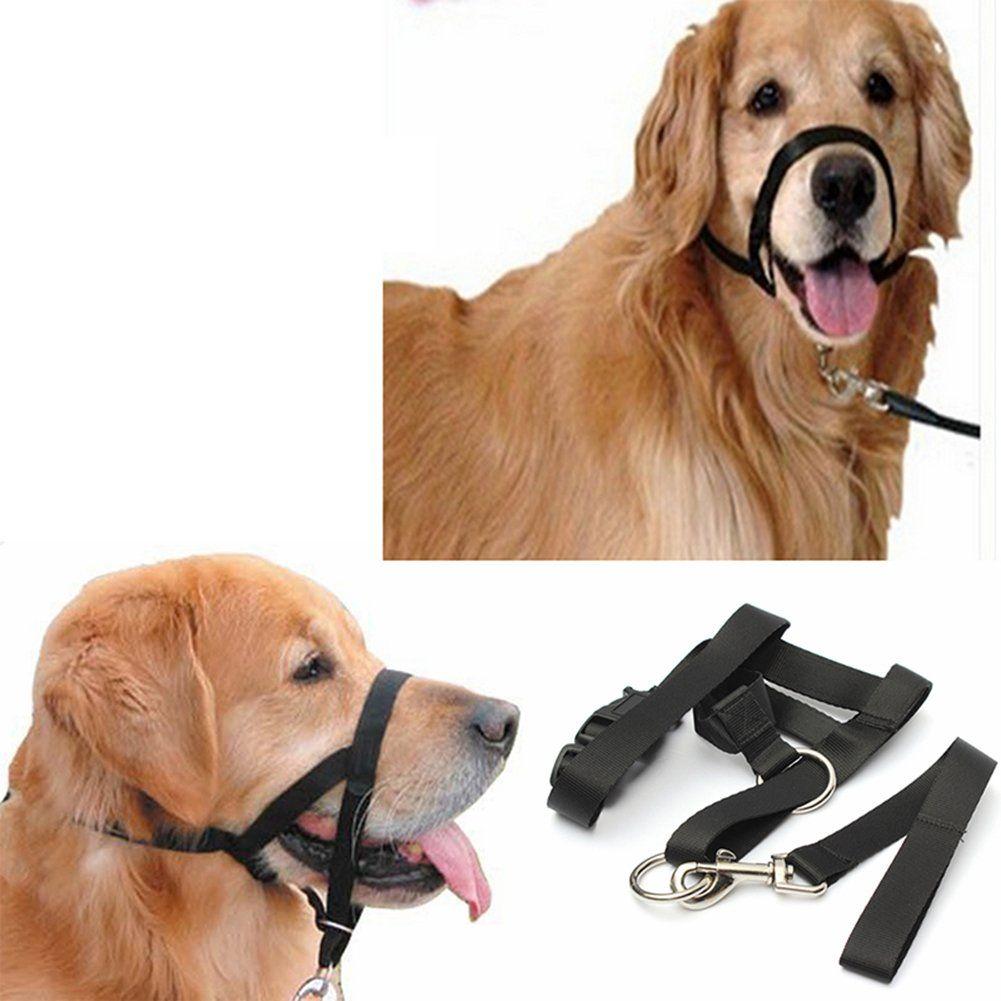 Pin On Dog Training