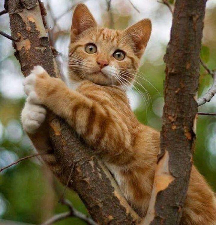 Į medžio viršūnę, į pačią viršūnę!