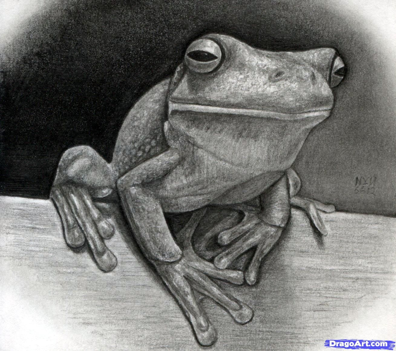 Realistic Tree Drawing | How to Draw a Realistic Frog ...
