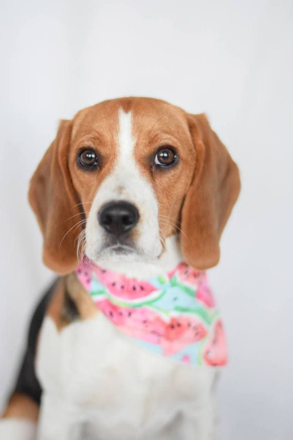 Deluxe Pooch Bandanas Are Handmade With Love And Care Deluxe