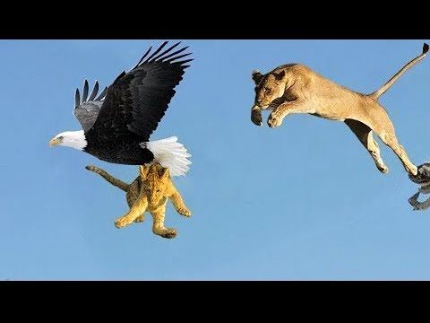 Most Deadly EAGLE Attacks 2019 - Most Amazing Moments Of Wild Animal Fights