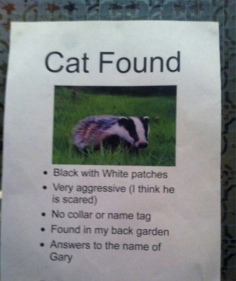 Lost Cat Racoon Funny