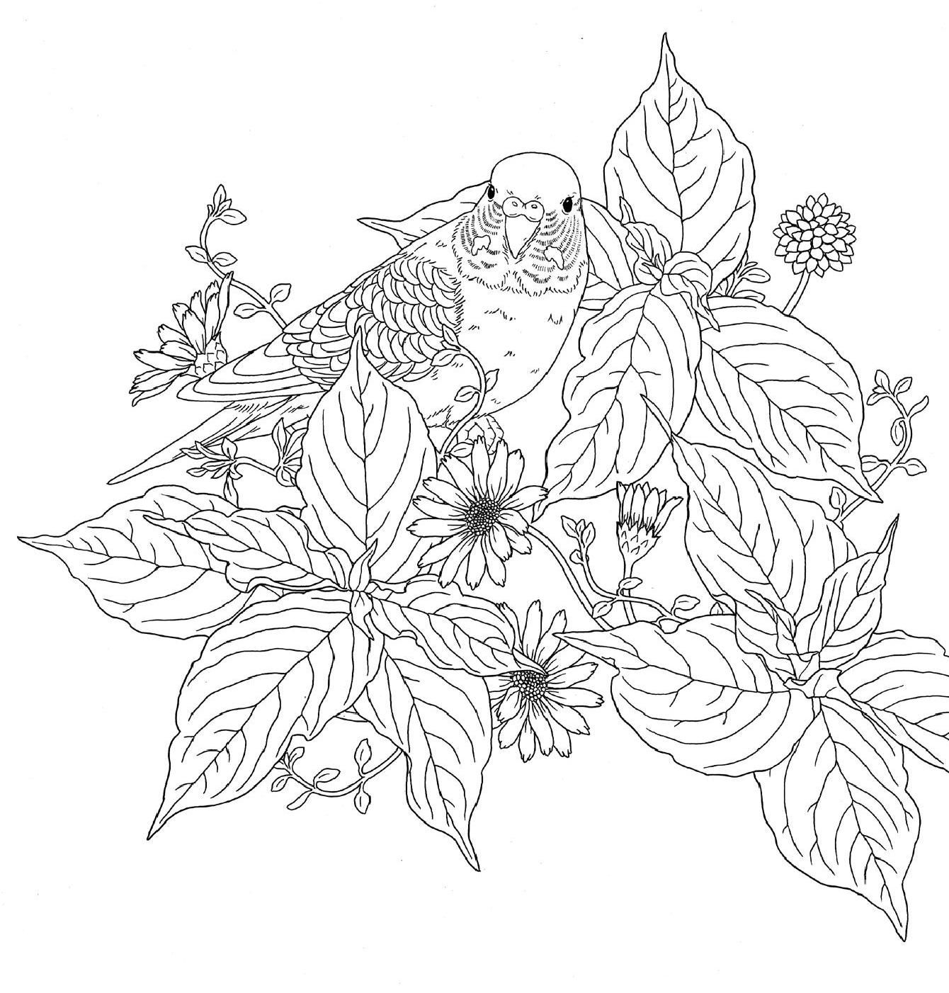 Harmony of nature adult coloring and newspaper