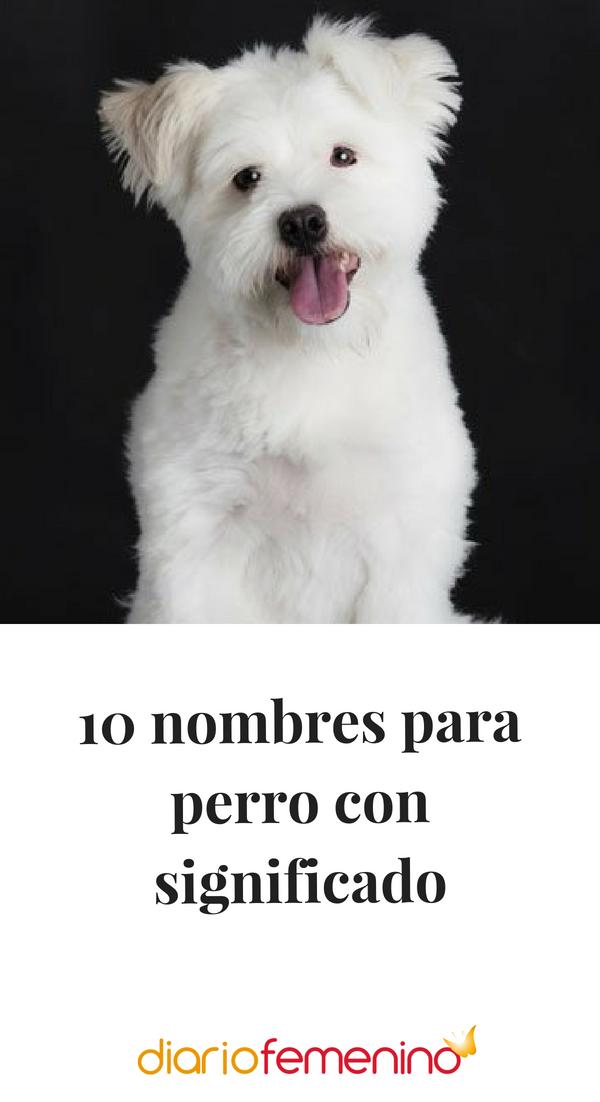 10 Nombres Para Perro Con Significado Nombres De Perros Nombres De Perro Hembra Nombres Para Perro Hembra
