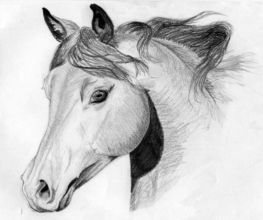 dessin cheval