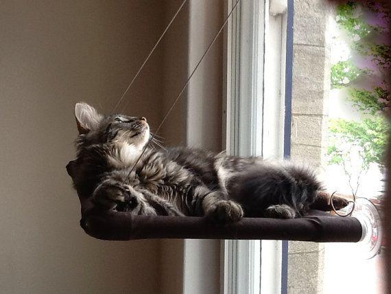 Cat Shelf - Removable - DIY - YouTube