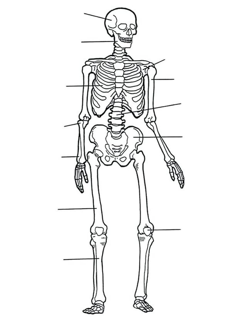Pirate Skeleton Coloring Pages To Print Printable Projekter