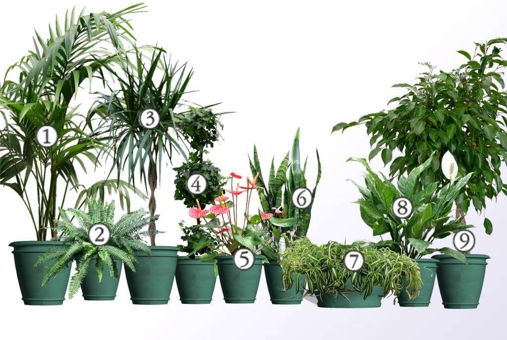 Rosliny Doniczkowe Oczyszczajace Powietrze Mini Plants House Plants Plants