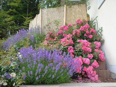 blumengarten anlegen with heidetraum mit lavendel, mein garten, Garten und bauen