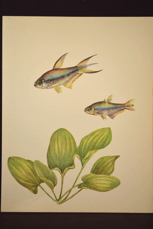 Aquarium Fish Art Wall Decor Tropical Fish Print Aquatic Plant ...