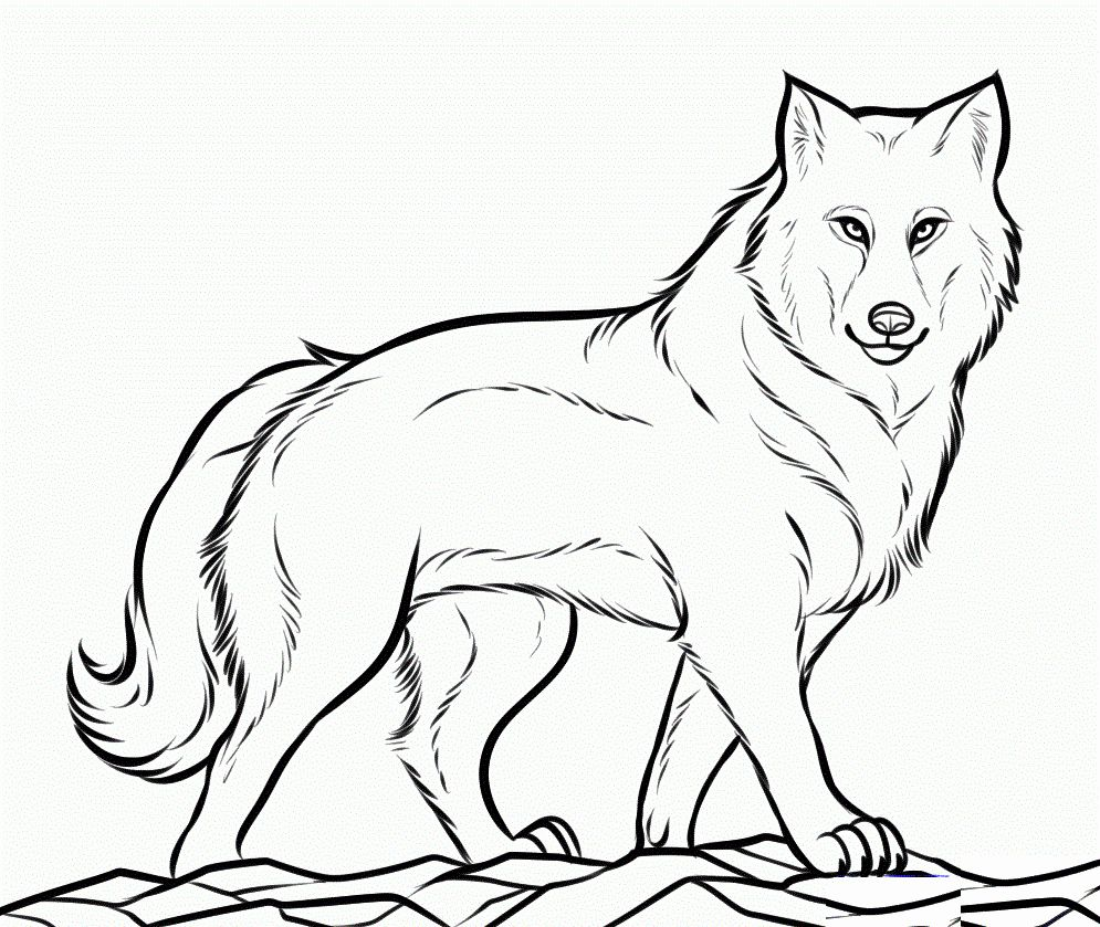 Coloring Pages Realistic Animals Beautiful Realistic Animals Coloring Pages In 2020 Wolf Colors Animal Coloring Pages Coloring Pictures