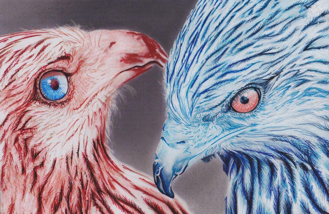 Beautiful Creatures Adult Coloring Book Birds Of Prey Examples