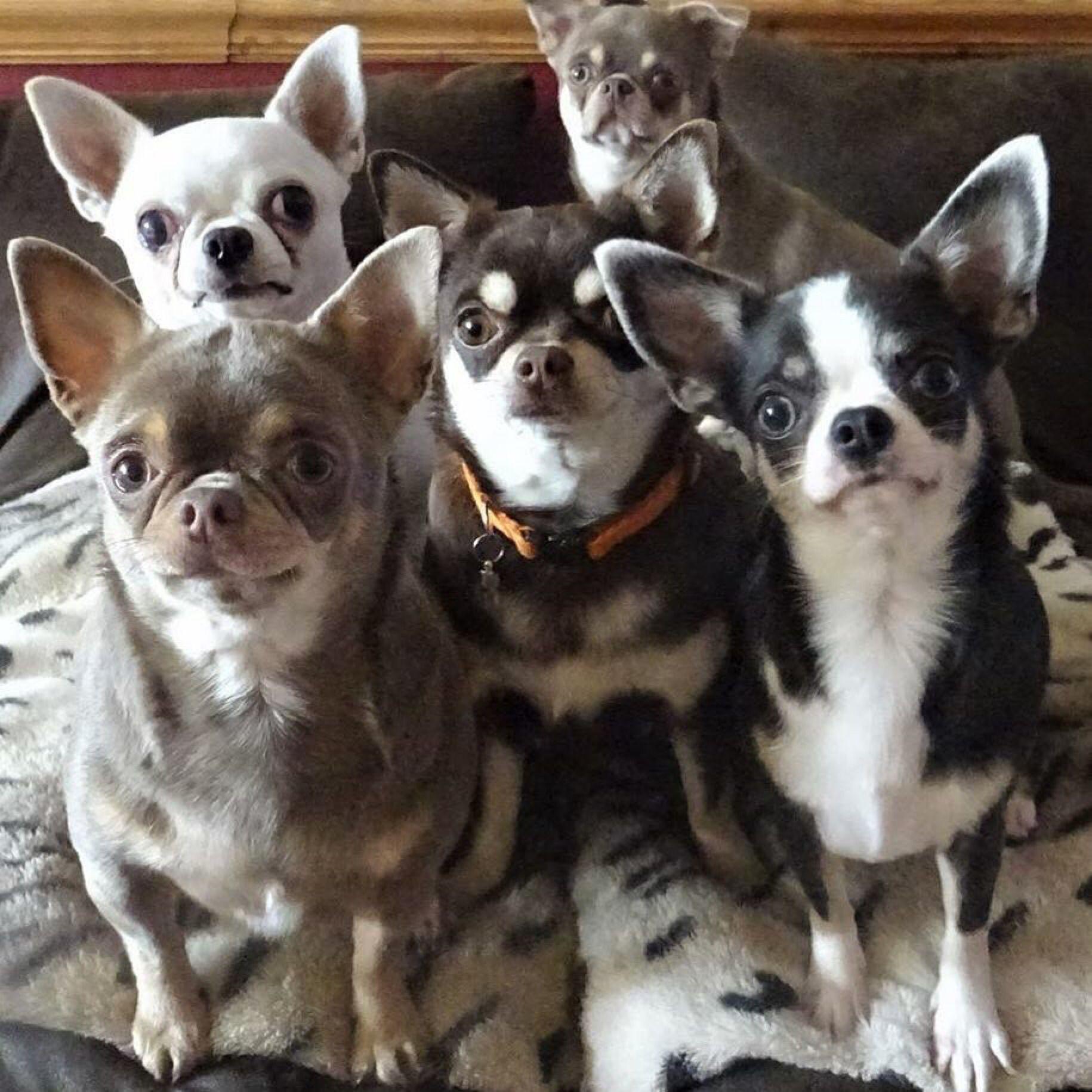 Pin De Leddy Berrios En Perros Mascotas Perros Animales