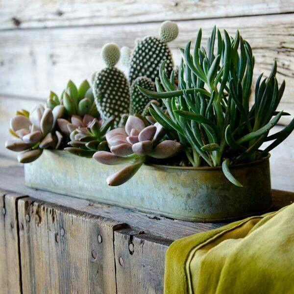 hoy decoramos con c ctus y suculentas cactus pinterest plante interieur plantes grasses. Black Bedroom Furniture Sets. Home Design Ideas