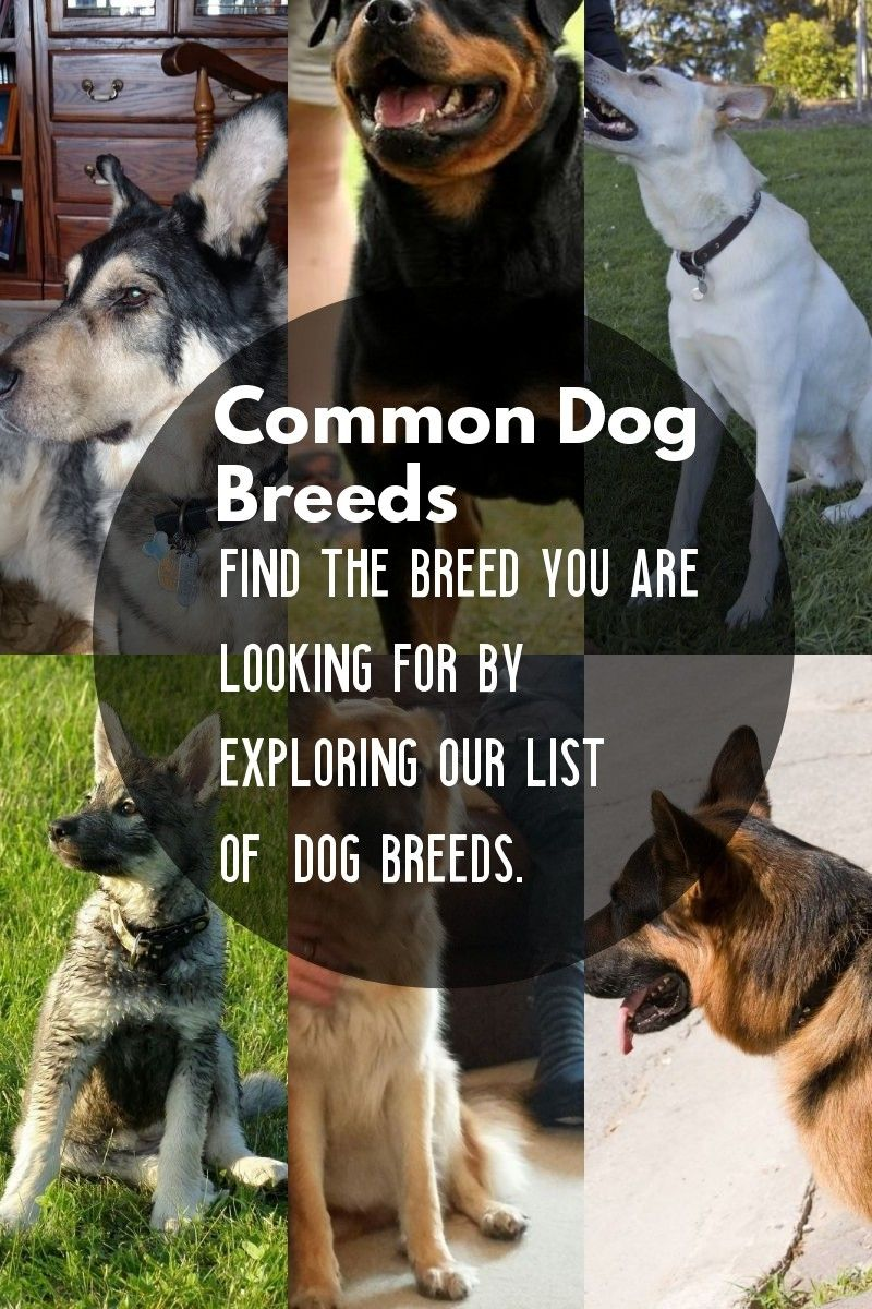 5 Dog Breeds That Are Widely Renowned Around The Globe Dog Breeds Dogs Terrier Breeds