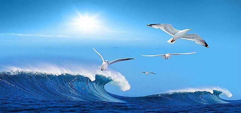 Albatros Aves marinas Ave Aves acuaticas Antecedentes