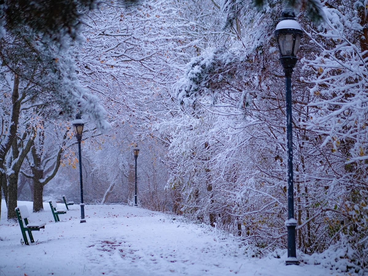 Snowy Park In The Winter Free Image By Rawpixel Com Aaron Burden In 2020 Stock Images Free Image Photo