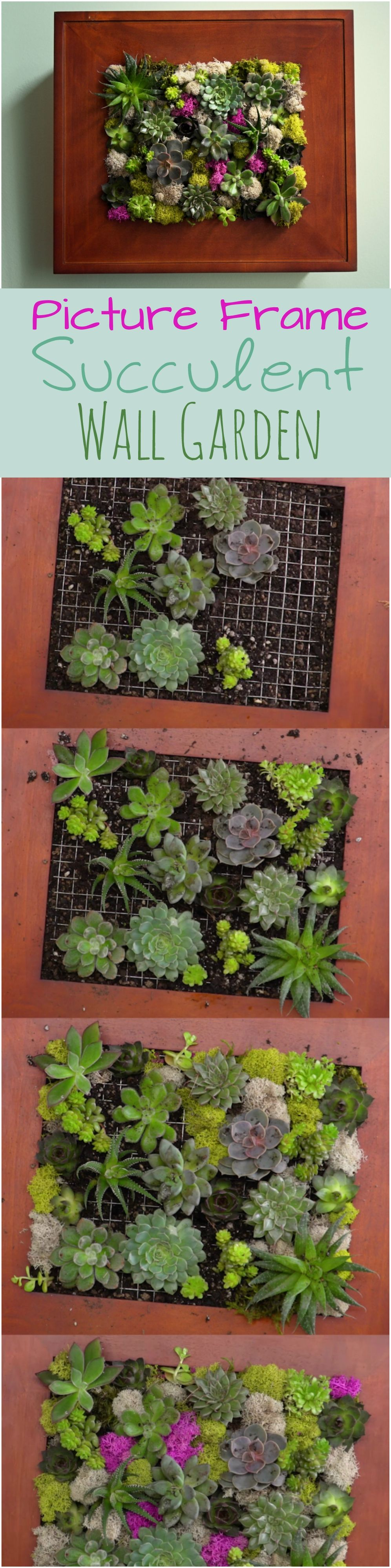 Create your own picture frame planter blooming