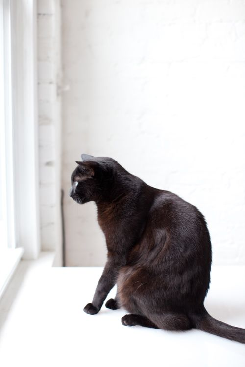 Caitlin Mociun's cat Judas