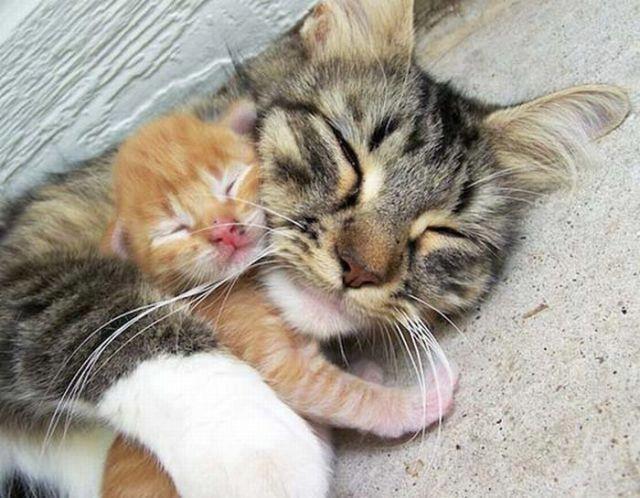 Mother Cat & Kitten love.