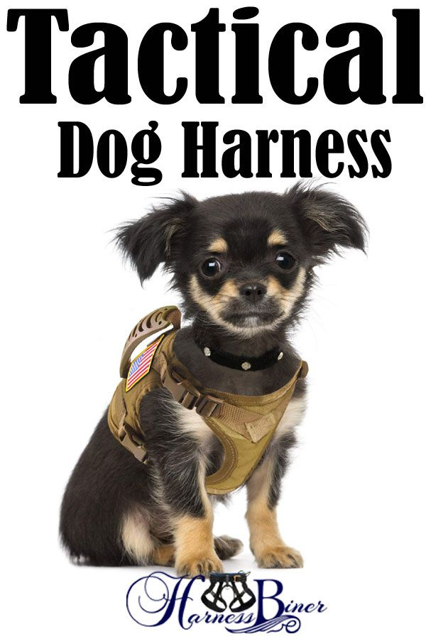Tactical Dog Working Vest Training Harness No Pull Adjustable