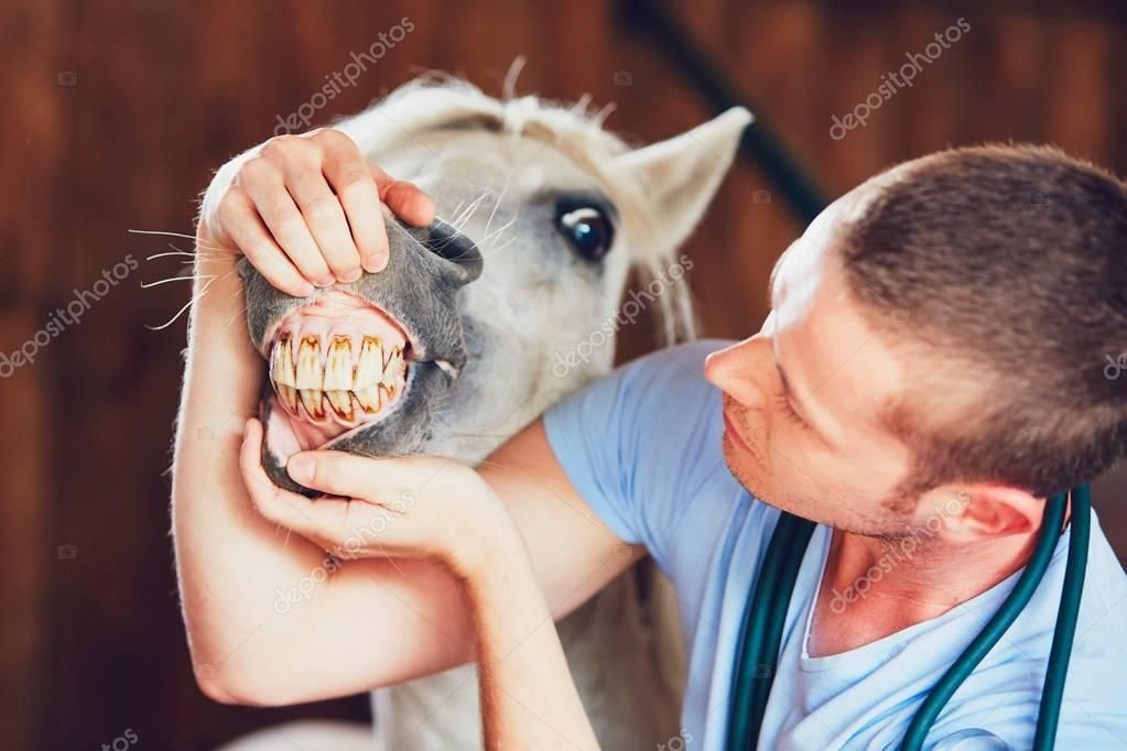 Veterinary medicine at farm Stock Image , AFFILIATE,