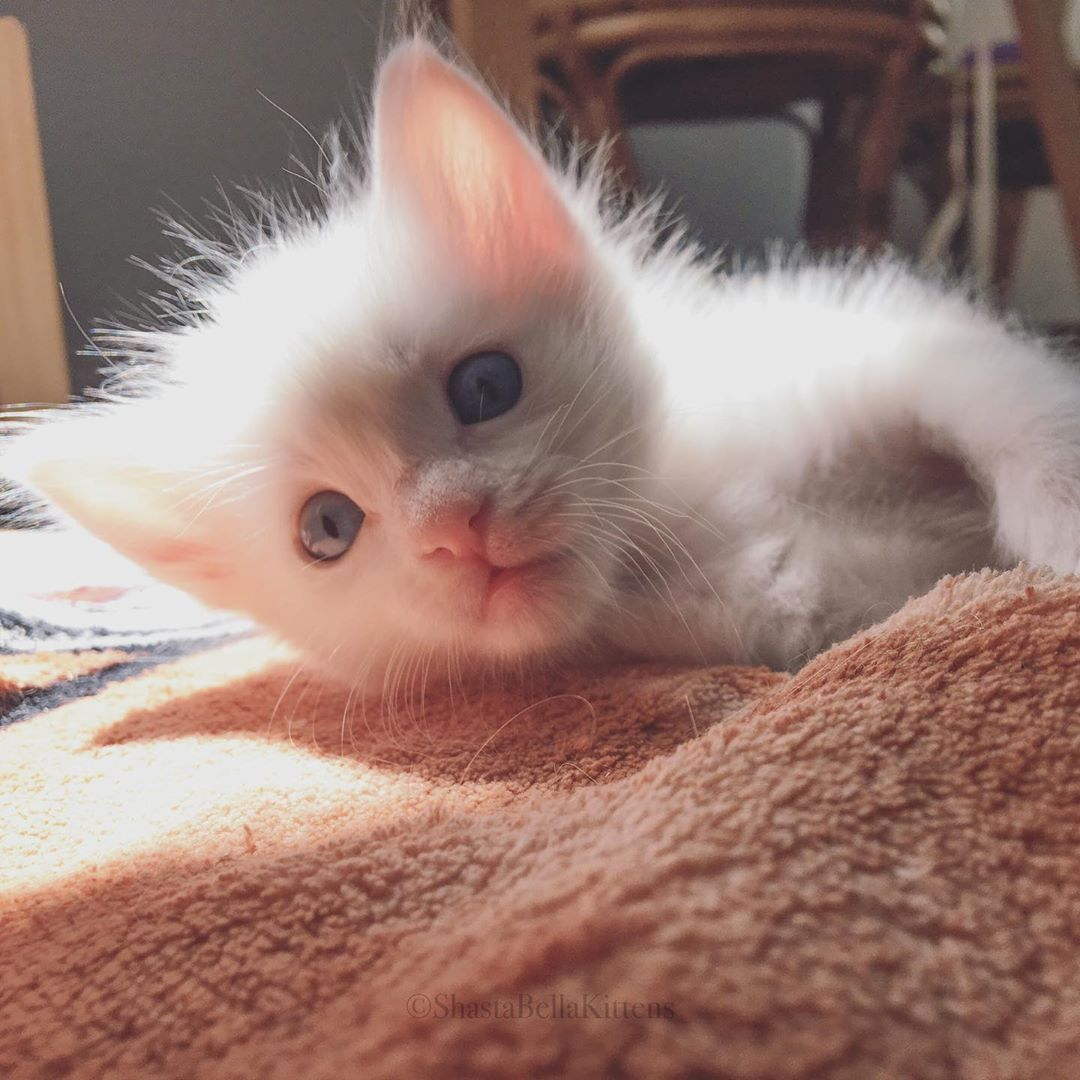 Cat Hello Little One Shastabellakittens Cats California Rescuecats Catrescue Picoftheday Cat Catsof Cats Of Catstagram Cat Cats Cat Day Cat Photo