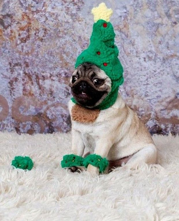 Pug S Christmas Photo Funny Cute Animals Dog Puppy Lol Costume