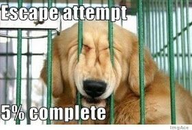 The Royal Poke 15 Most Funny Dog Memes Funny Dogs Funny Dog Pictures Funny Animals