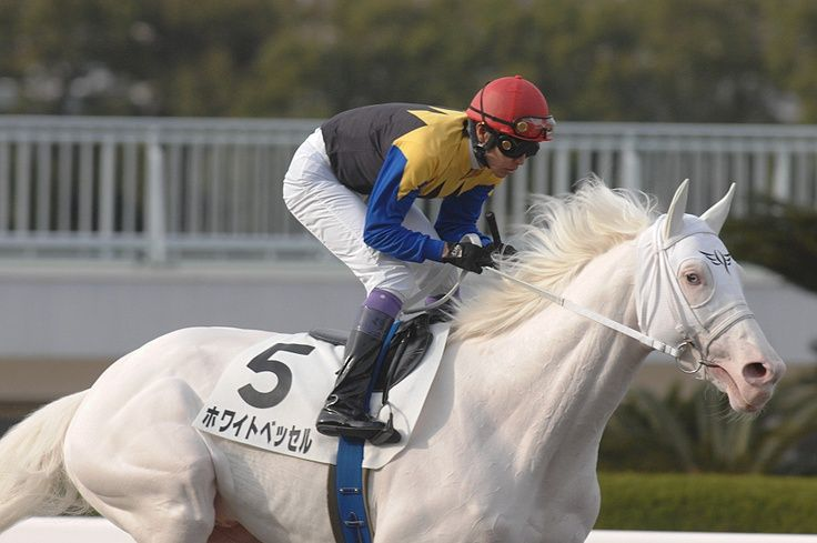 Japanese Race Horse Called White Vessel A True White Horse Thoroughbred Racehorse Horses Thoroughbred