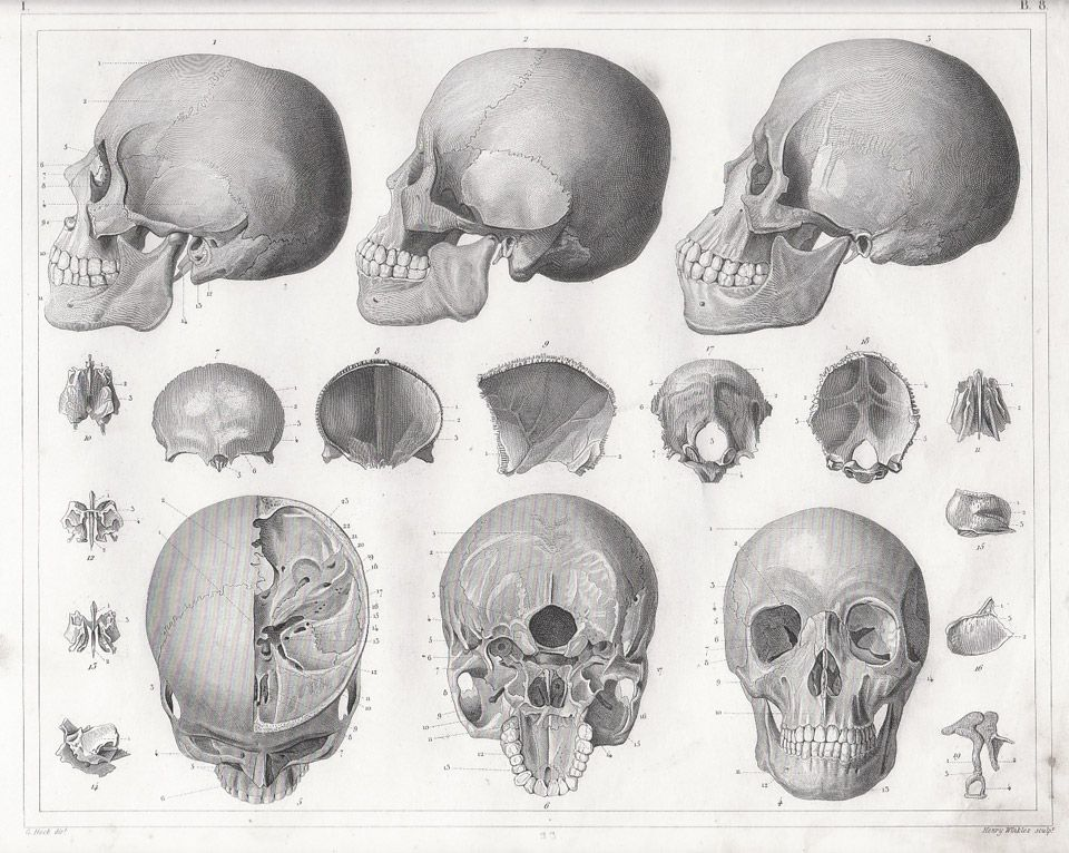 Here is an Artist's Guide to Drawing the Human Head