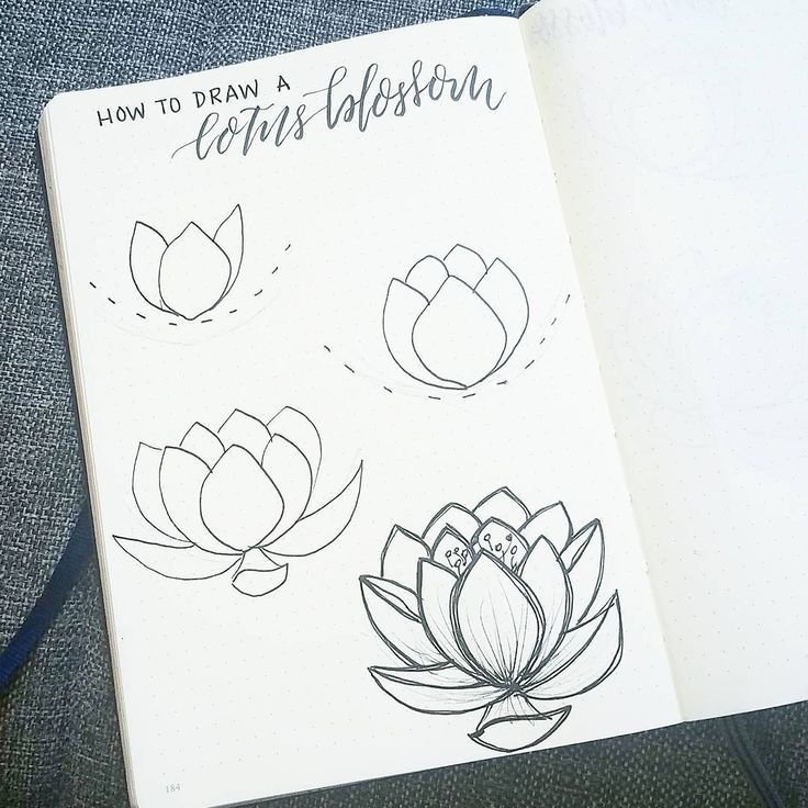 I 39 m on vacation for the long weekend and so am posting a quick tutorial on how to draw a lotus - Petit quick coloriage ...