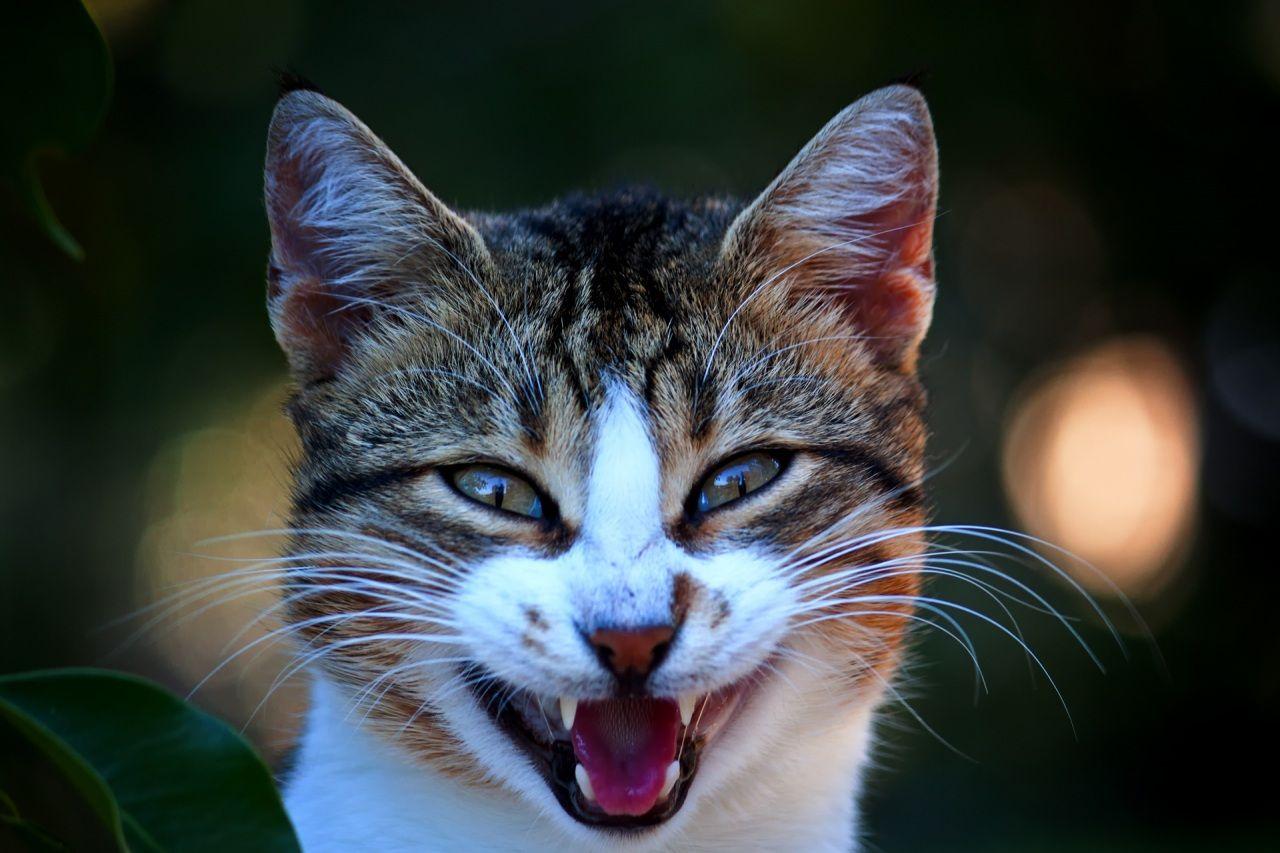 монастыре картинка смешные морды кошек остальном, копейка
