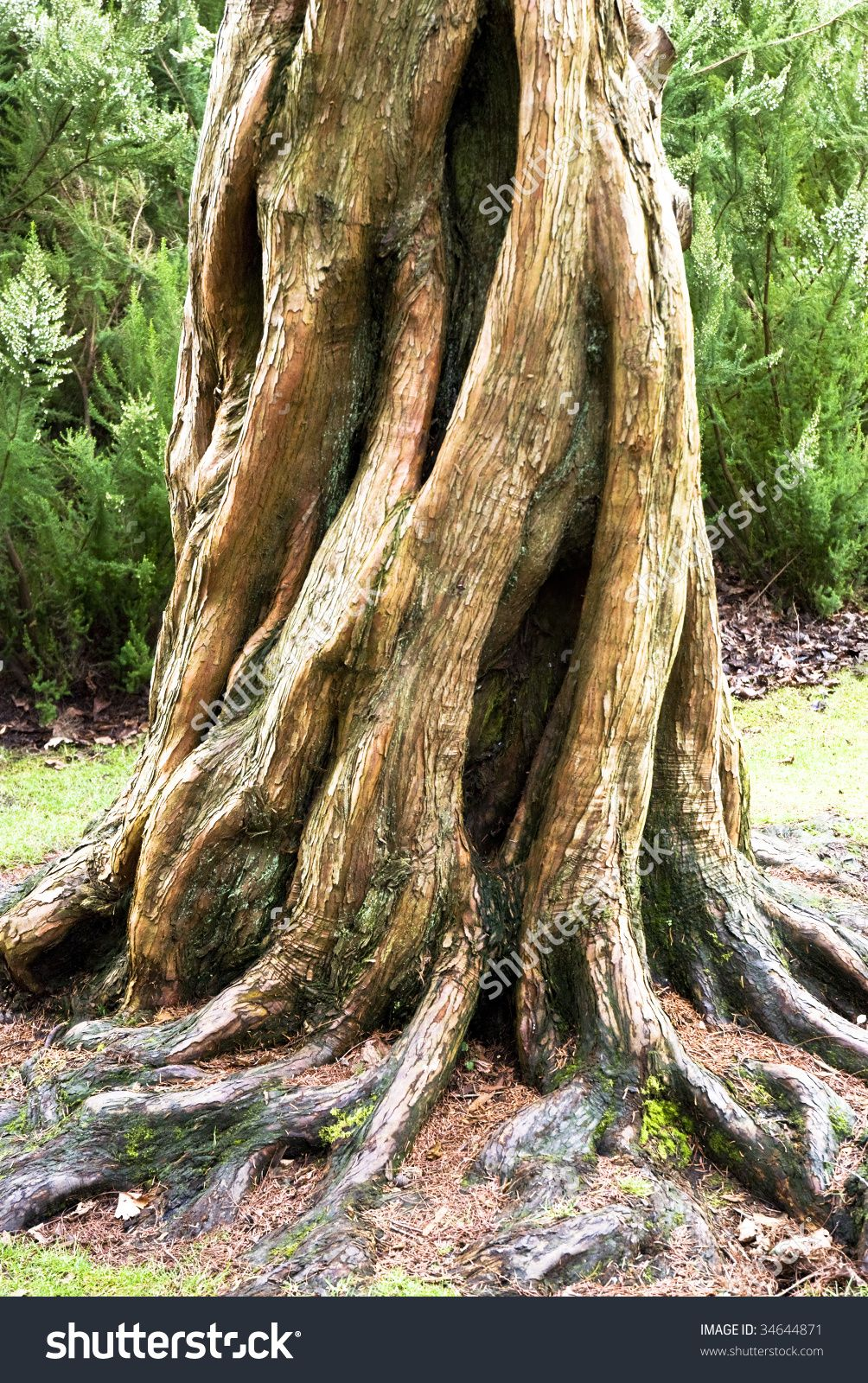 beautiful tree trunks - Yahoo Image Search Results ...